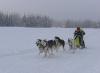 15-internationales-schlittenhunderennen-frauenwald-2010