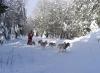 internationales-schlittenhunderennen-frauenwald-2010