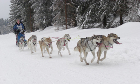 Musher bei 14. Internationalen Schlittenhunderennen