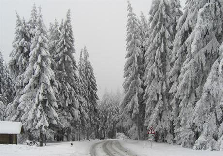 Winterliche Strasse am Rennsteig bei Masserberg
