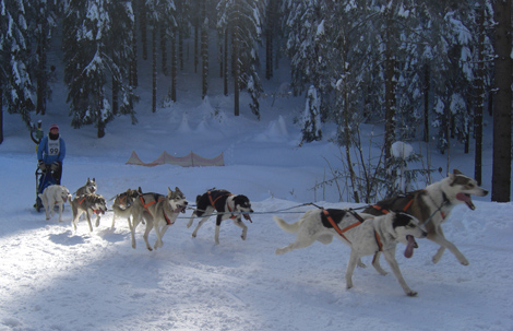 15. Internationales Schlittenhunderennen, Musher